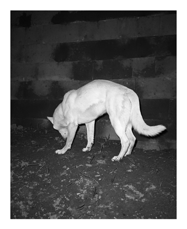 White - by Tereza Zelenkova