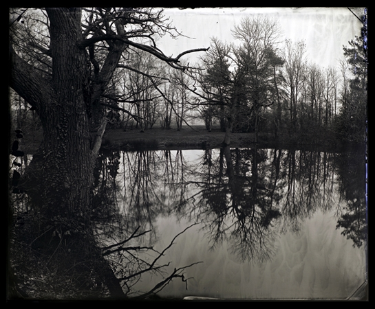 Plate 27 the old oak over the lake - taken in 2011 as part of long ongoing body of work.