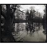 Sebastian Edge Oak on the lake